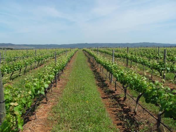 post-vineyard-construction